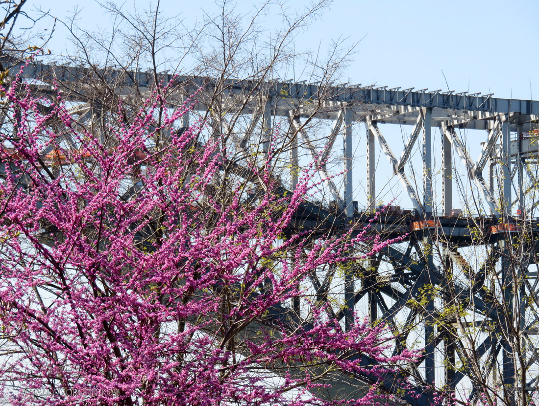 IMG_1160-bayonne-bridge-cherry-blossom-small-wmark