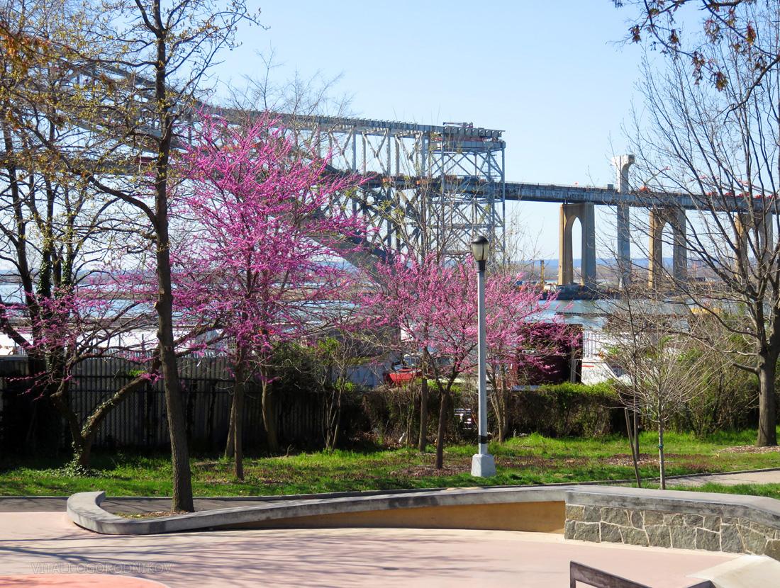 IMG_1161-bayonne-bridge-cherry-blossom-Faber-Park-small-wmark