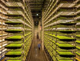 View inside an AeroFarms vertical farm - Photo courtesy of AeroFarms and the Jersey City Housing Authority