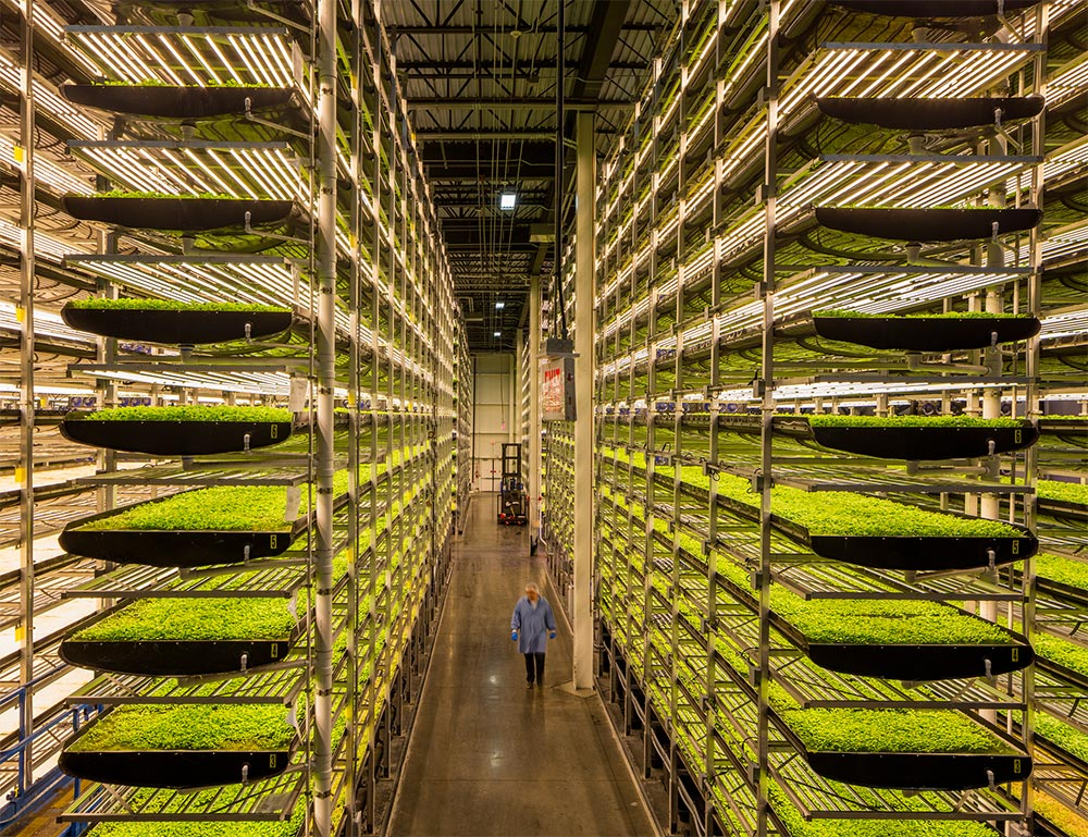 View inside an AeroFarms vertical farm - Photo courtesy of AeroFarms and the Jersey City Housing Authority